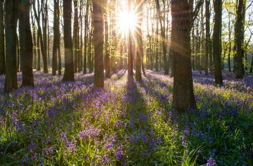 What Happens at a Woodland Burial? Everything to Know
